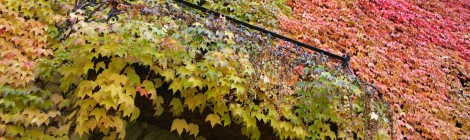 Tempo di fall foliage, 4 idee weekend